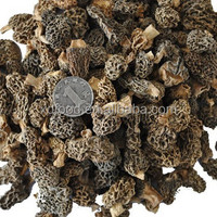 Chinese Shanxi Leave the handle 2 cm high quality morchella for hot sale