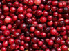 Frozen Cranberry For Sale From China