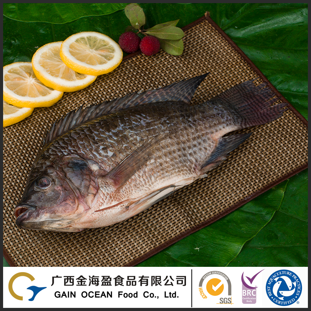 Export Frozen Sea Food Frozen Gutted And Scaled Fish Natural Tilapia
