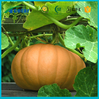 pumpkin seeds and supply pure herb medicine seeds for tablet