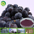 Free sample of bilberry extract powder