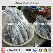 Best quality new fresh whole round frozen seafrozen grey mullet fish