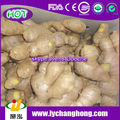 latest price of fresh ginger/ air dried ginger/dried ginger