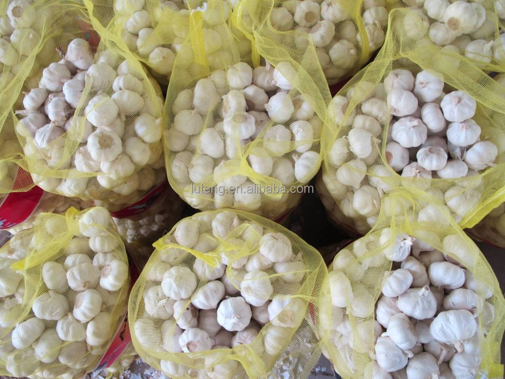 New crop fresh garlic of fruit and vegetable