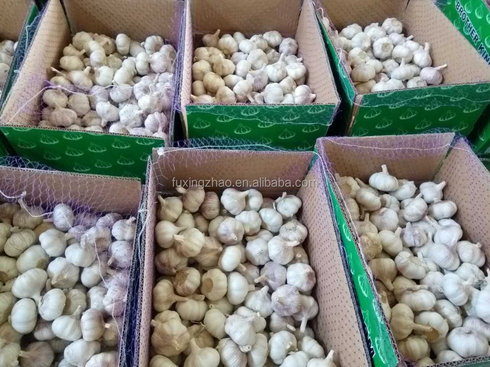 Farm China Cheap Garlic Exporter Shandong Garlic With Great Price
