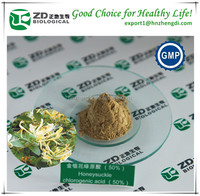Traditional Chinese herb medicine honeysuckle powder