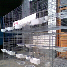 Pigeon Metal Farming Cages And Pigeon Racing Products Supplier