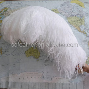 Large White Ostrich Feathers for Wedding Centerpiece imported from South Africa