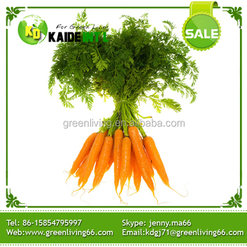 our company export fresh carrot , big carrot , lowest price