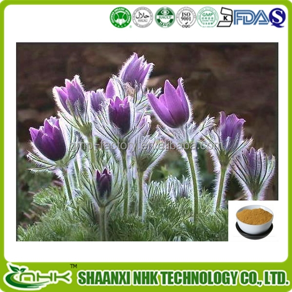 Pulsatilla chinensis extract, Anemone Root Extract,Radix Pulsatillae Chinensis Radix Pulsatillae Chinensis P.E