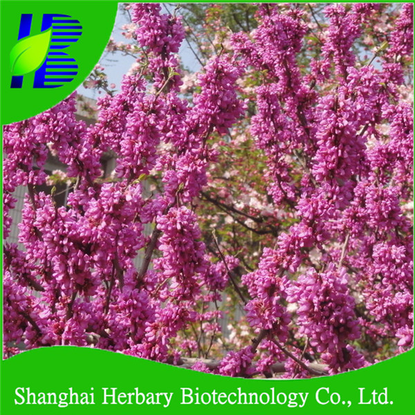 Ornamental flower seeds Cercis chinensis seeds price