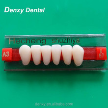 Dental products synthetic resin teeth Multi-layer Acrylic Resin Teeth