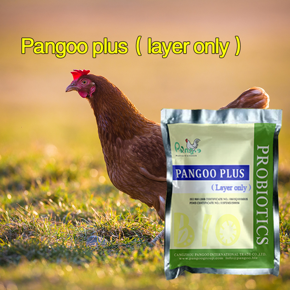 hot sale poultry, chicken, pigeon probiotic enzymes feed ingredient