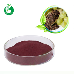 Natural antioxidants Red Grape Seed Extract Powder Proanthocyanidins