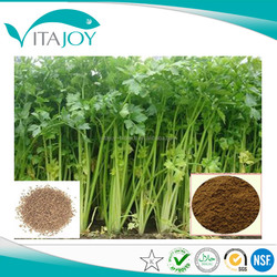 High Quality Pure Natural herbal extract Celery Seed Extract 4:1 in US stock with Fast Delivery