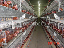 H-type Multi-tier Layer Cage Poultry Farm Equipment for Sale