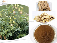 High quality Astragalus Root Extract Cycloastragenol 98%