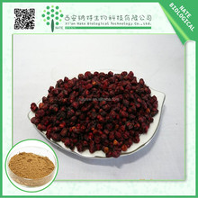 GMP factory Provides schizandrae chinese fruit extract powder,schizandrae fruit powder, schizandrae berry extract with low price