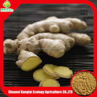 100% natural pure fresh ginger extract, 5% Gingerol by HPLC