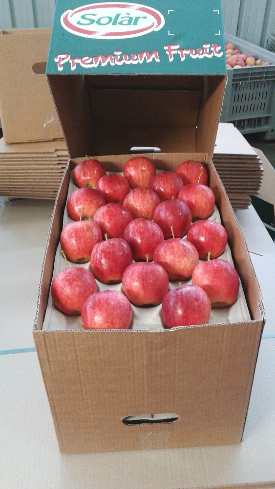 Italian Apples - Gala, Granny, Red, Fuji