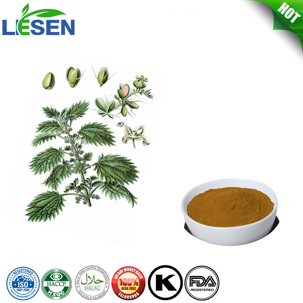 Wholesale Natural Nettle leaf