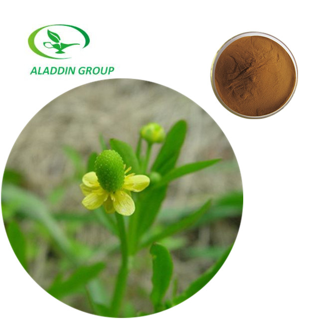 Anti Cancer Function Best Quality Ranunculus Ternatus Thunb Extract