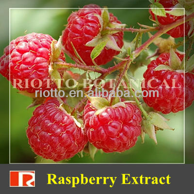 GMP standard factory supply Nature Black Raspberry Extract, Ketone 98%, 99%
