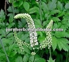 high quality black cohosh extract powder