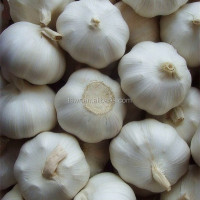 New Crop Garlic Chinese Fresh Garlic