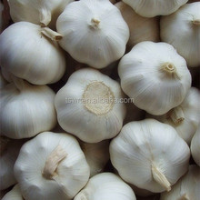 New Crop Garlic Chinese fresh garlic white garlic price