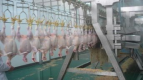 chicken slaughter equipment product