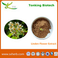 wholesale price supply Linden flower extract