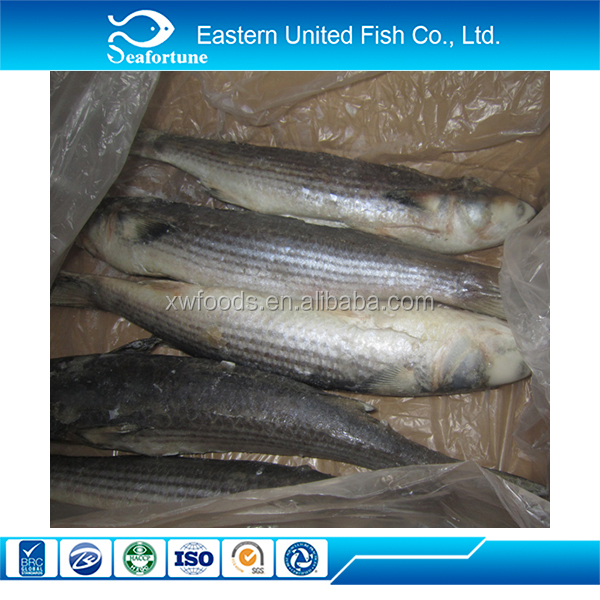 seafood export wholesale health Frozen Grey Mullet Fish