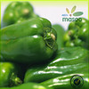 /product-detail/fresh-green-round-habanero-peppers-export-price-60020941182.html