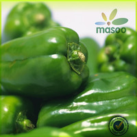 fresh green round habanero peppers export price
