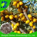 High sprouting rate Seabuckthorn seed