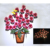 multifunction solar lighted wall hanging metal with flower design wall light Outdoor Solar Garden stake Lights