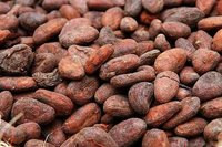 COCOA AND COFFEE BEAN SEED