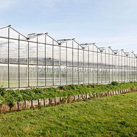 Multi Span Polycarbonate Green House Agriculture