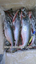 Frozen Whole Pangasius, Patin, Basa