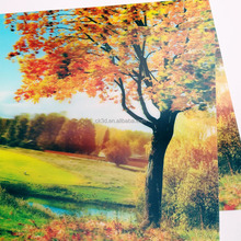 wholesale 3d pictures of animals, lenticular animal photo