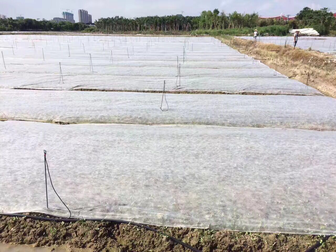 15-100Gsm White Agriculture Ground Cover ,Black UV 10-50M Rolls Pp Spunbond Non Woven Fabric For Agriculture