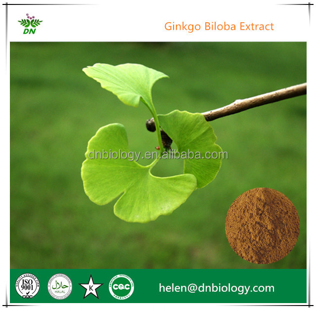 High Quality Ginkgo Biloba leaf p.e Gingko Extract 24,6 for health care