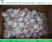 No sprout China Natural Fresh Garlic Price for Sale