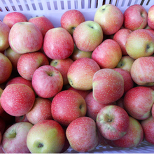 Matured Chinese Sweet Juicy China Fuji Apple Price