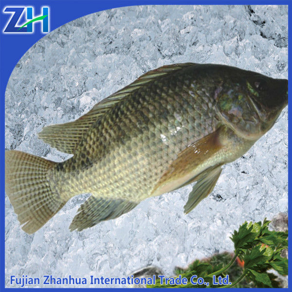 Food frozen seafood whole round tilapia fish wholesale price