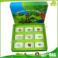 Embedded Food Specimen Education Science Toys