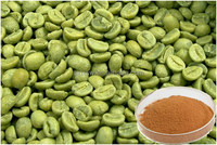 High quality new coming distributor green coffee bean extract