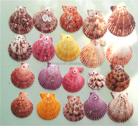 Beach Mixed Medium Shells Assorted Sea Shells home decoration pieces seashells Home Decoration