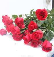 factory direct bulk wholesale fresh natural flowers single roses